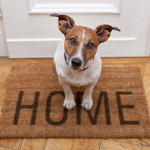 dog welcoming you home